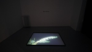 A light room (4)